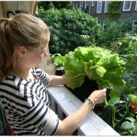 Cursus 'Moestuinieren op Balkon of kleine tuin'