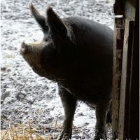 Boerderij Hamel houdt Winterfair